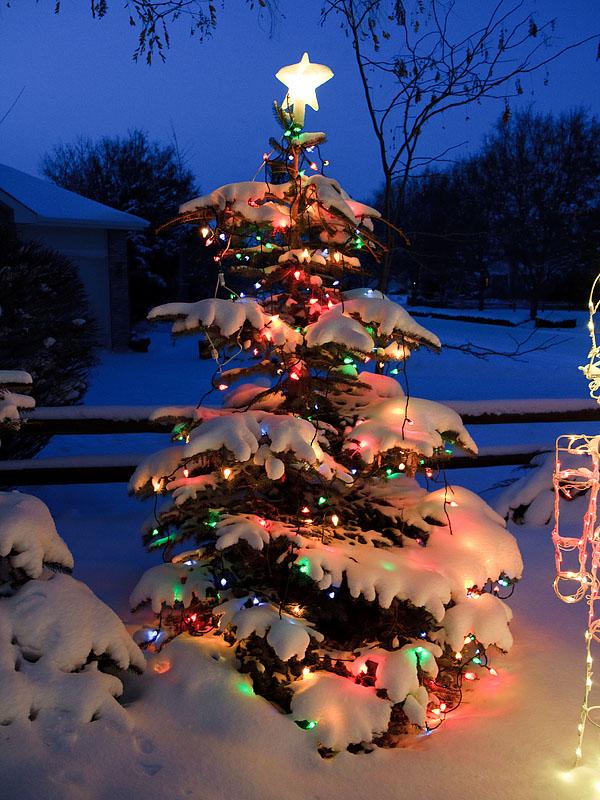 2009_12_25 a white christmas in colorado - Colorado Christmas