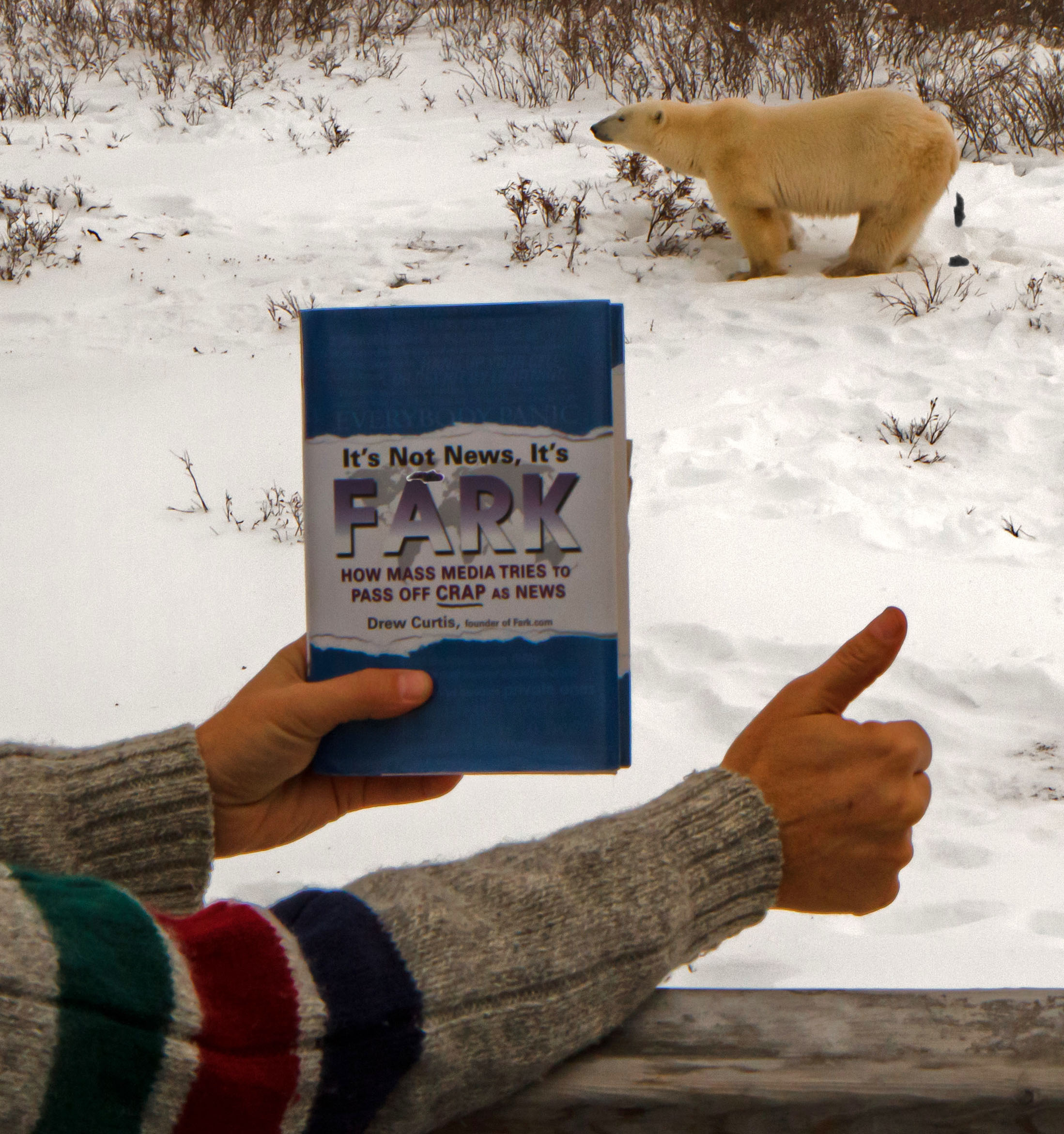 fark polar bears churchill canada