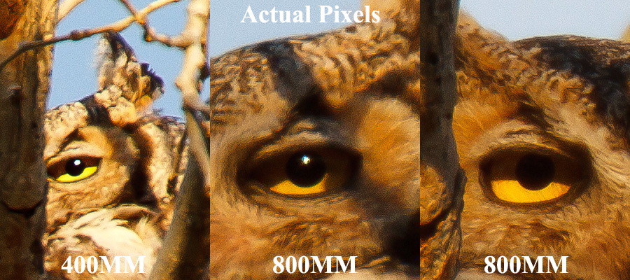 canon 70-200 F2.8 IS version 2 owl 1