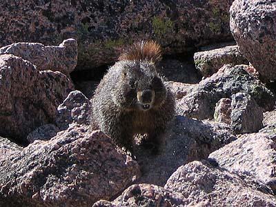 koala 22 marmots hibernate 9 year