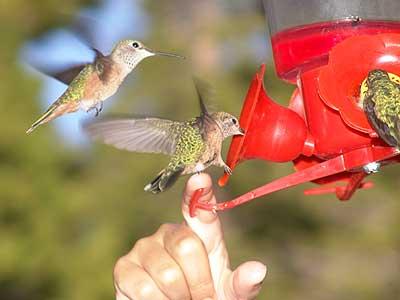 humming-bird-feeder-3.jpg